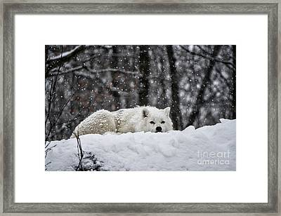 Framed Print featuring the photograph Dreams Of Warmer Weather by Heather King