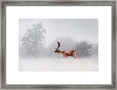 Dreamscape Deer Framed Print