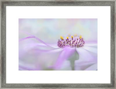 Dreamy Framed Print by Ann Bridges