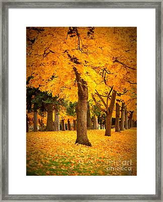 Dreamy Autumn Day Framed Print by Carol Groenen