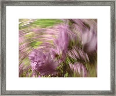 Dreamy Azaleas Framed Print