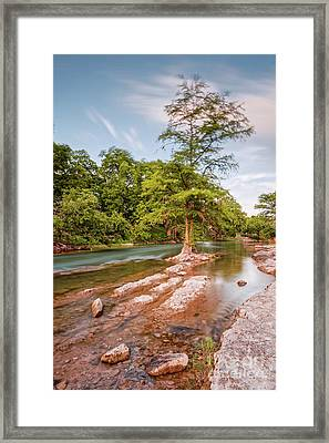 Dreamy Bald Cypress At Guadalupe River - Canyon Lake Texas Hill Country Framed Print