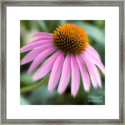 Dreamy Coneflower Framed Print by Jeannie Burleson