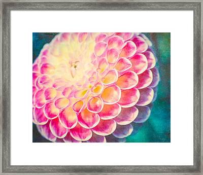 Dreamy Dahlia  Framed Print