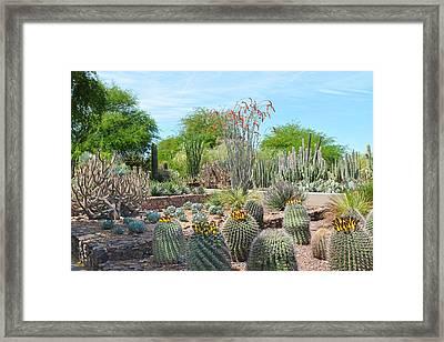 Dreamy Desert Cactus Framed Print