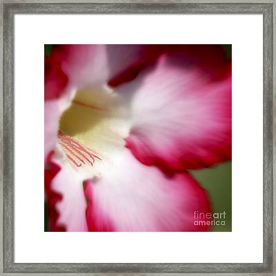 Dreamy Desert Rose Framed Print by Jeannie Burleson