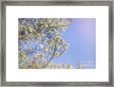 Dreamy Dogwoods Framed Print by Joan McCool
