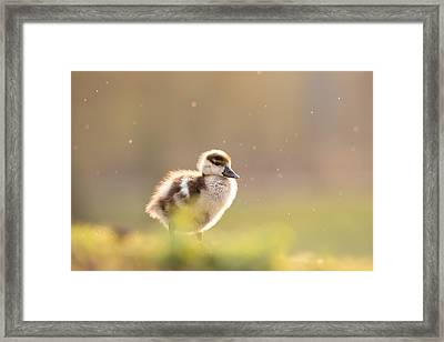 Dreamy Duckling Framed Print by Roeselien Raimond