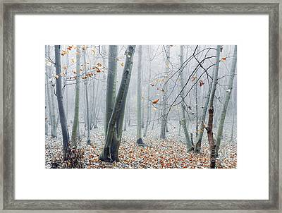 Dreamy Forest Framed Print by Svetlana Sewell