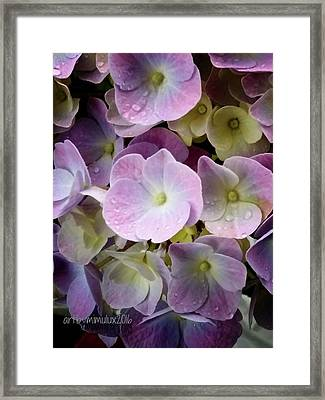Framed Print featuring the photograph Dreamy Hydrangea by Mimulux patricia no No