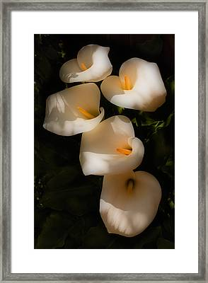 Dreamy Lilies Framed Print by Mick Burkey