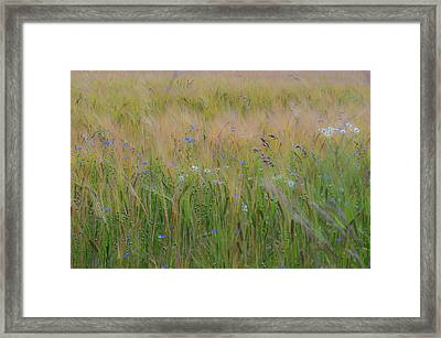 Dreamy Meadow Framed Print
