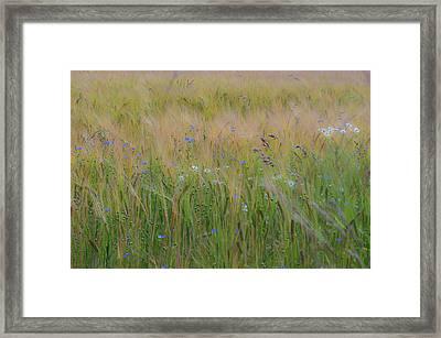 Dreamy Meadow Framed Print