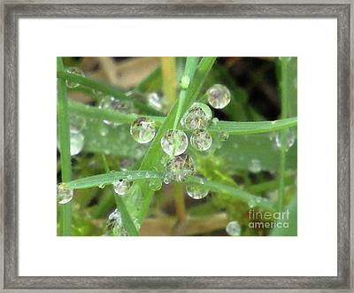 Dreamy Morning 5 Framed Print