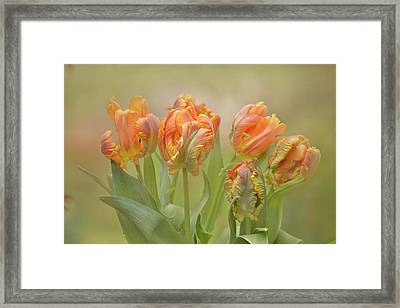 Framed Print featuring the photograph Dreamy Parrot Tulips by Ann Bridges