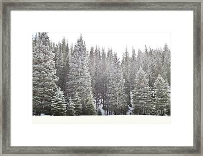 Framed Print featuring the photograph Dreamy Pine Snow Forest Landscape by Andrea Hazel Ihlefeld