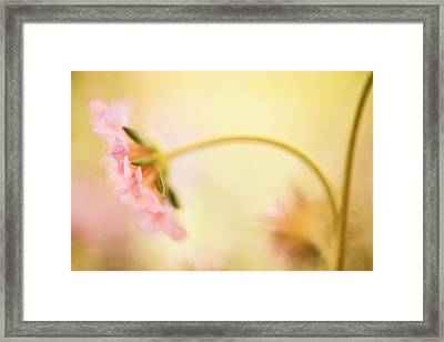 Framed Print featuring the photograph Dreamy Pink Flower by Bonnie Bruno