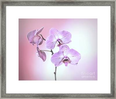 Framed Print featuring the photograph Dreamy Pink Orchid by Linda Phelps