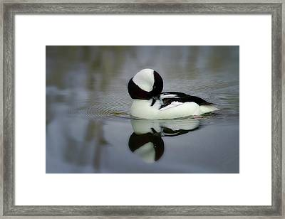 Dreamy Preen Framed Print