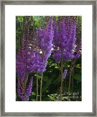 Dreamy Purple Framed Print