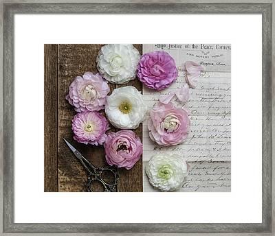 Dreamy Ranunculus  Framed Print