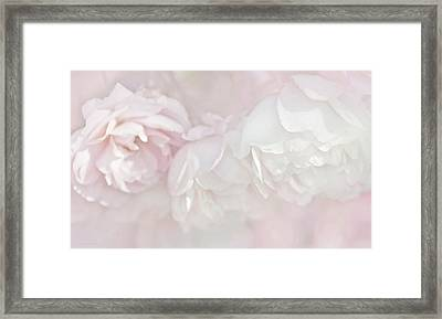 Dreamy Rose Flowers In Pink White Pastels Framed Print