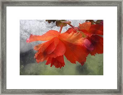 Dreamy Tangerine Framed Print by Julie Lueders