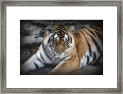 Dreamy Tiger Framed Print by Sandy Keeton