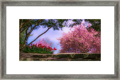 Dreamy Tulip Respite Framed Print