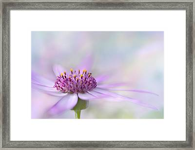Dreamy Two Framed Print by Ann Bridges