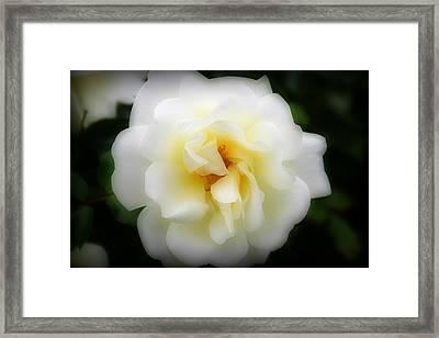 Dreamy White Rose Framed Print