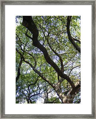 Dred Knots Framed Print by Megan Canell  Downing