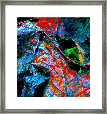 Drenched In Color Framed Print by Gwyn Newcombe