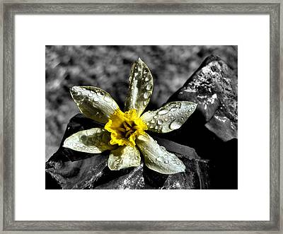 Drenched In Light Framed Print by Karen Scovill