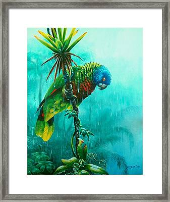 Drenched - St. Lucia Parrot Framed Print by Christopher Cox