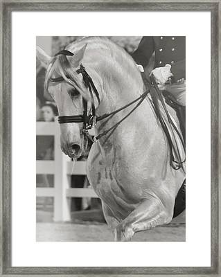Dressage Perfection Framed Print by JAMART Photography