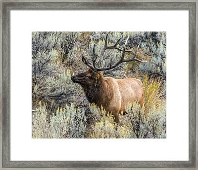 Framed Print featuring the photograph Dressed For Rut by Yeates Photography