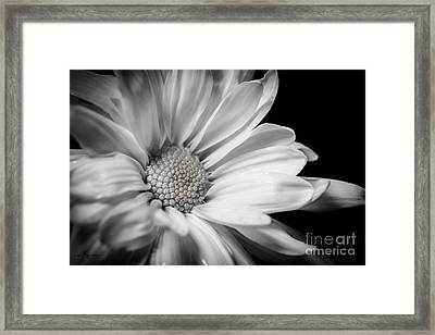 Dressed In Black And White Framed Print