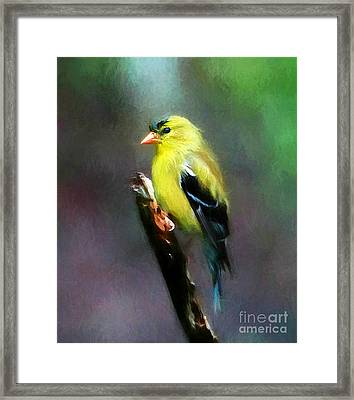 Dressed To Kill Framed Print by Tina  LeCour