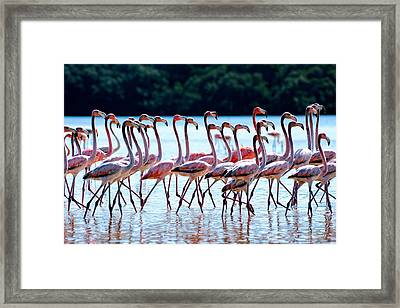 Dressed Up In Pink Framed Print