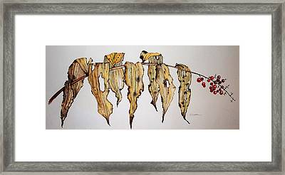 Dried Berry Weed Framed Print