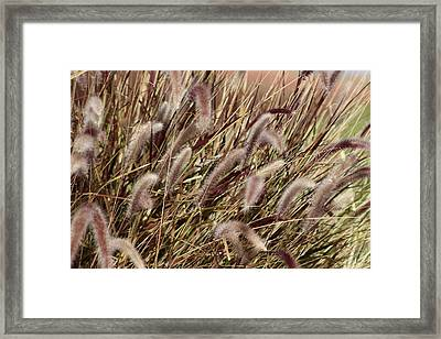 Dried Grasses In Burgundy And Toasted Wheat Framed Print