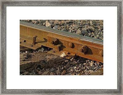 Dried Leaf By Track Framed Print by Steve Augustin