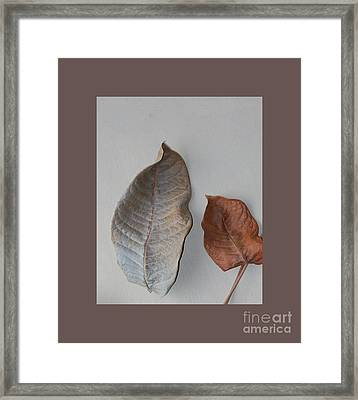 Dried Leaves In A Frame Framed Print