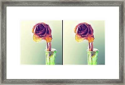 Dried Rose - Gently Cross Your Eyes And Focus On The Middle Image Framed Print by Brian Wallace