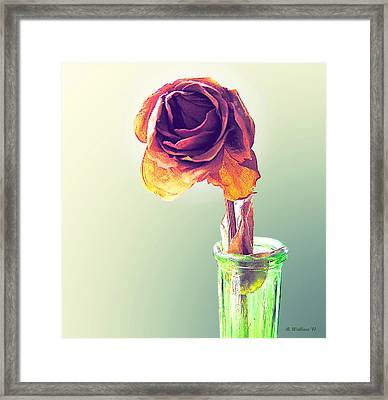 Dried Rose Framed Print by Brian Wallace