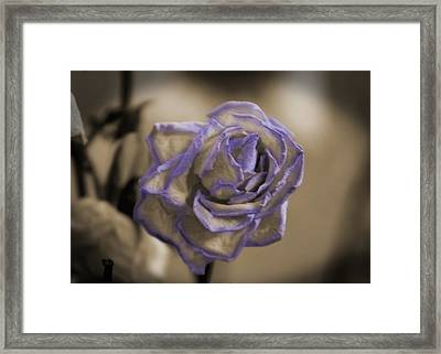 Dried Rose In Sienna And Ultra Violet Framed Print