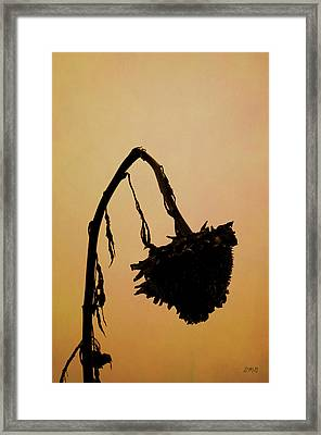 Dried Sunflower Framed Print by Dave Gordon