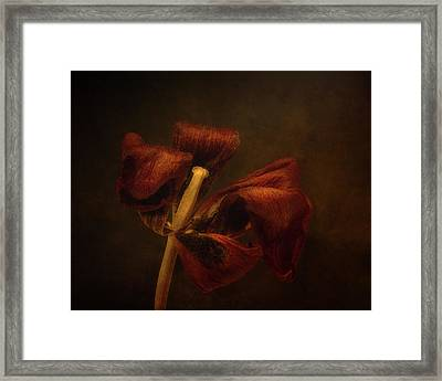 Dried Tulip Blossom 2 Framed Print by Scott Norris
