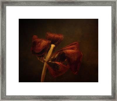 Dried Tulip Blossom 2 Framed Print